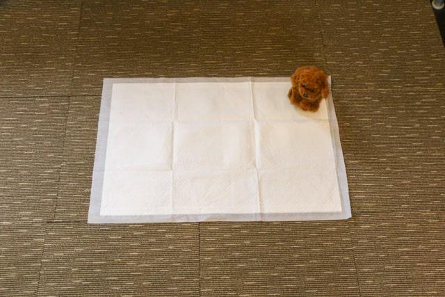 トイプードルのトイレダブルワイドサイズ